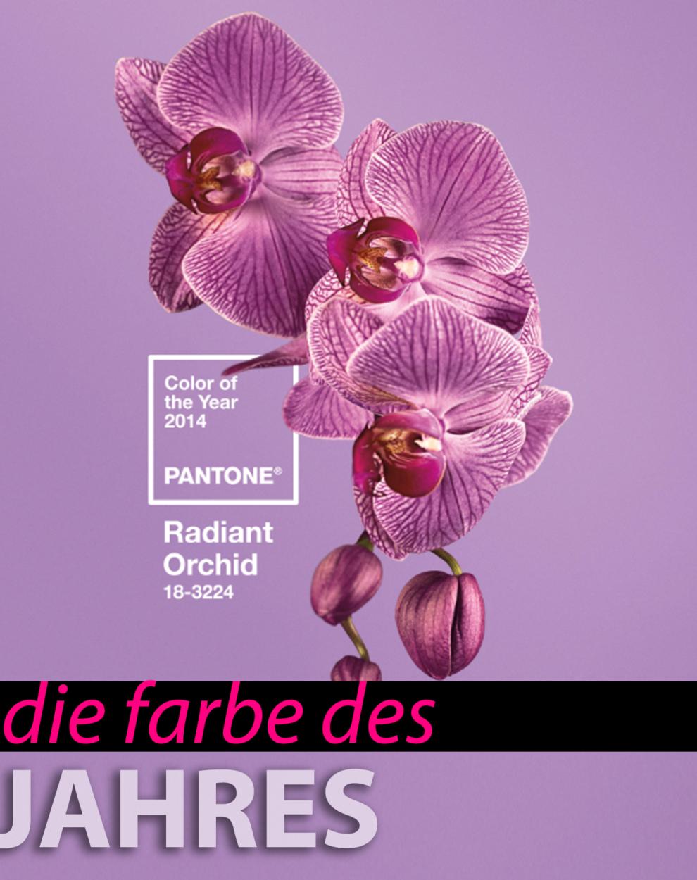 farbe des jahres 2014 radiant orchid ana alcazar blog. Black Bedroom Furniture Sets. Home Design Ideas