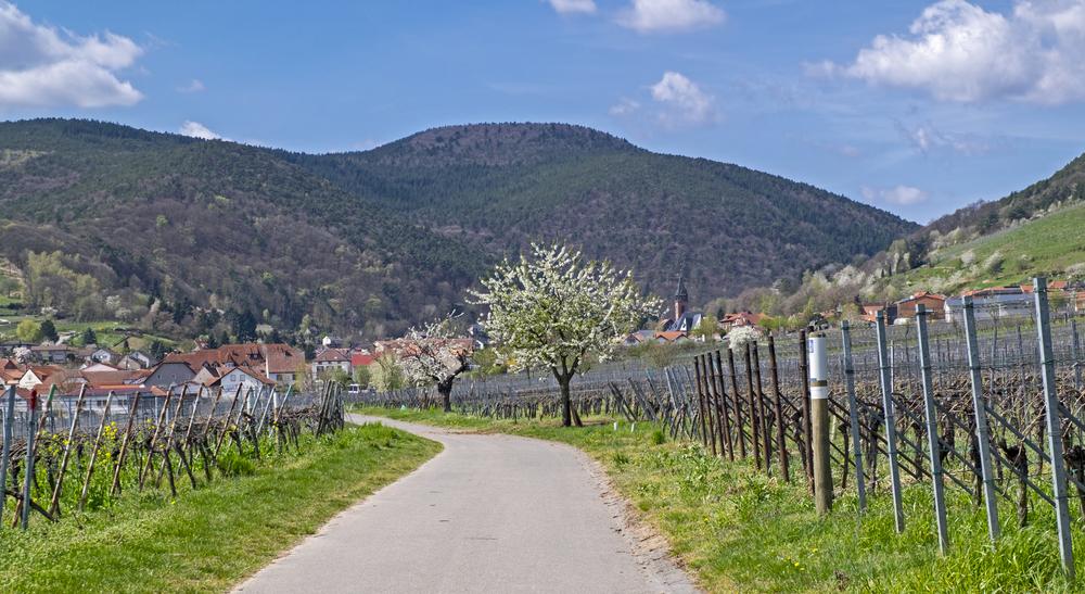 Weinstraße mit St. Martin im Hintergrund